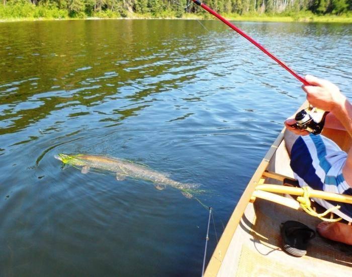 Рыбалка на спиннинг | спиннинг клаб - советы для начинающих рыбаков ловля щуки осенью на спиннинг - секреты удачной рыбалки