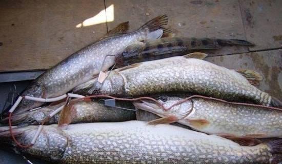 Рыболовная база «остров рыбака»