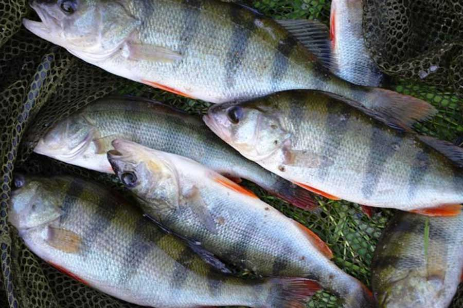Рыбалка в орле и орловской области