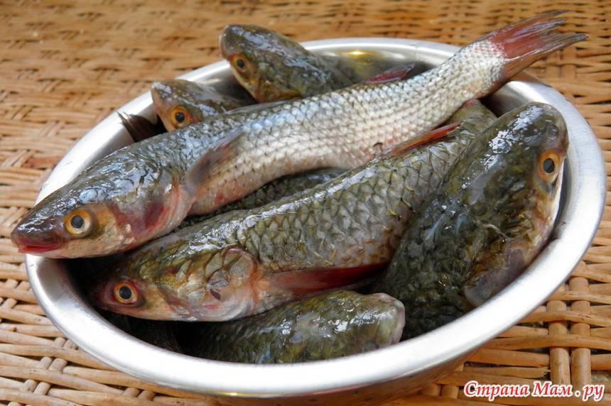 Лобань на что похожа по вкусу. лобань рыба польза и вред