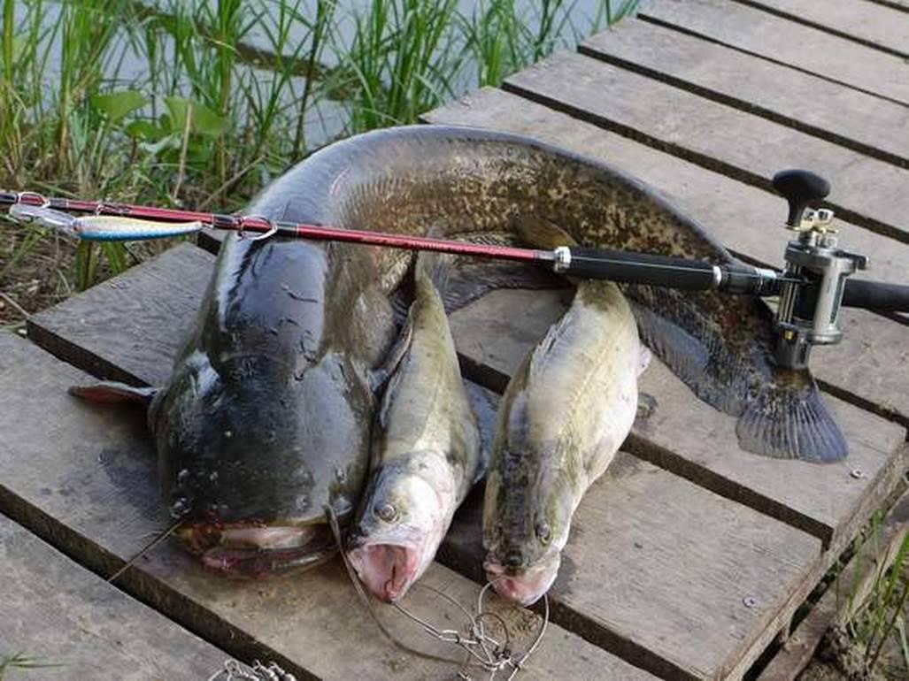Базы отдыха на каме – список лучших баз для отдыха и рыбалки