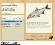 Ловля рыбы на подпуск