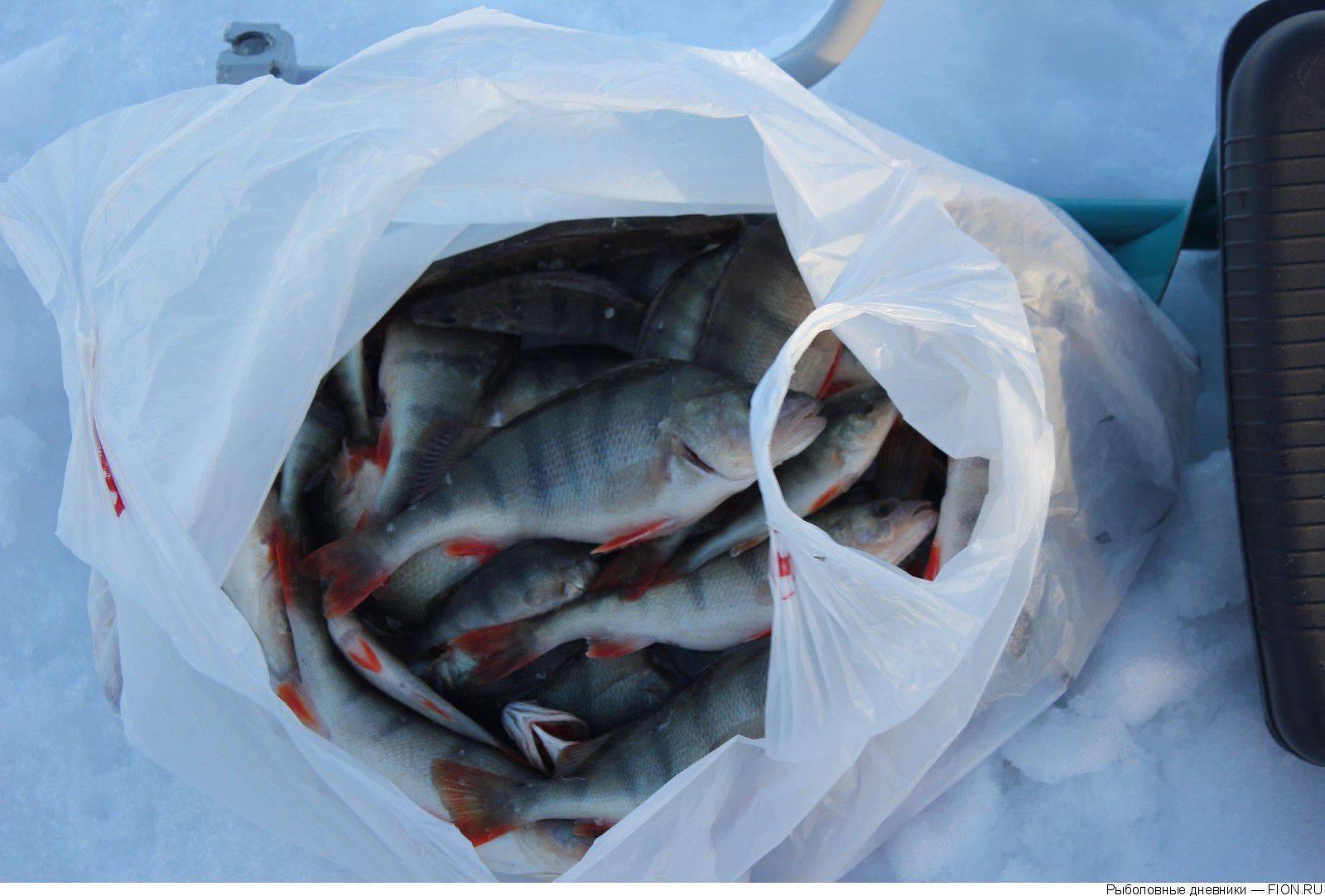 Рыбалка в омской области (55) | карта рыболовных мест