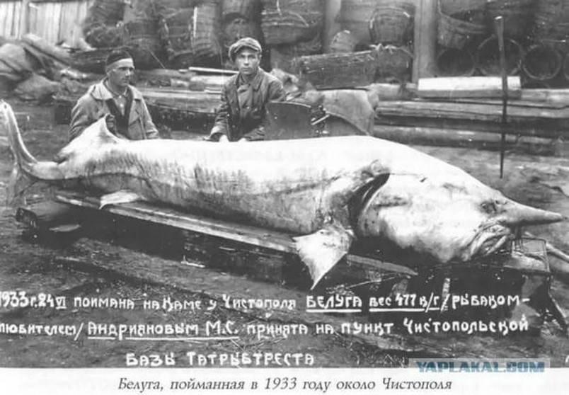 Водка белуга (beluga): описание, история и виды марки