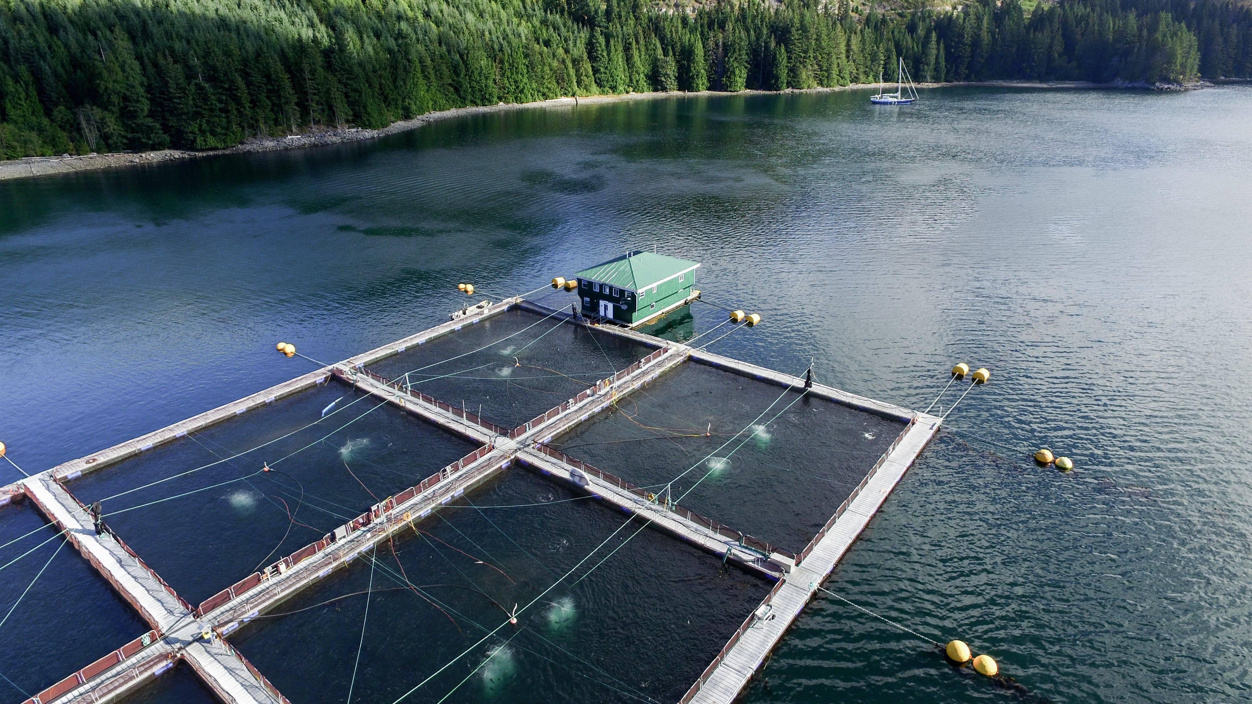 Озеро лютце в серпухове — рыбалка, цена, отзывы, официальный сайт, домики, на карте, как добраться