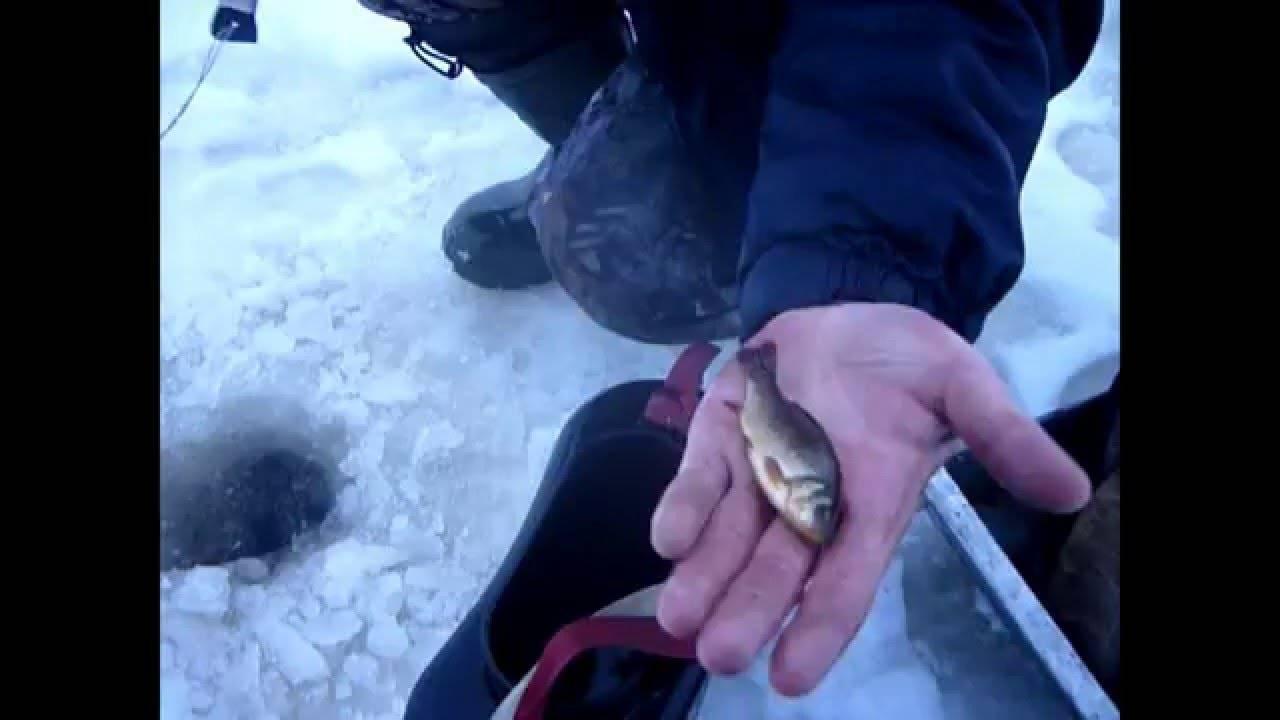 Как правильно насаживать живца на капкан на щуку (фото и видео)