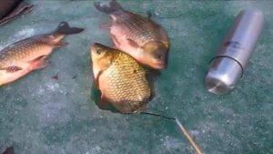 Весенняя ловля карася со льда - как прикормить и на что ловить? - самоделки для рыбалки своими руками