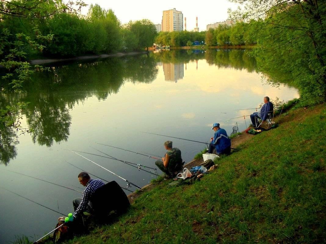 15 лучших рыболовных мест ивановской области. бесплатные и платные   животный мир