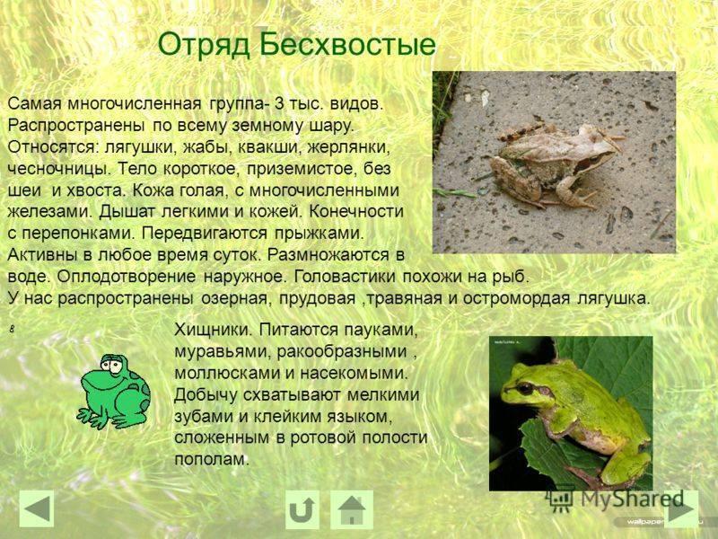 Как избавиться от лягушек в доме, погребе, на даче: простые способы, видео