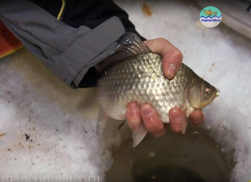 Зимняя рыбалка на карася: как поймать рыбу зимой на мормышку зимой, техника ловли на безмотылку зимой