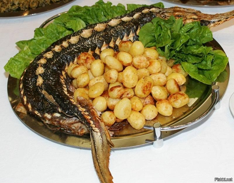 Рецепты приготовления стерляди: как приготовить быстро и вкусно, блюда в домашних условиях