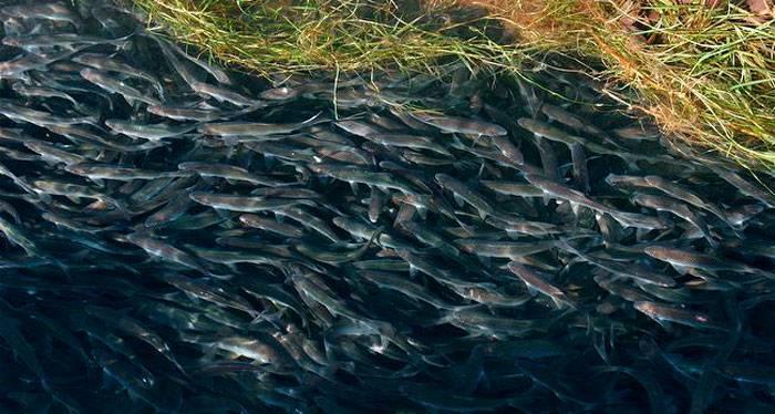 Женщина-рыбы: характеристика в любви и постели | знаки зодиака