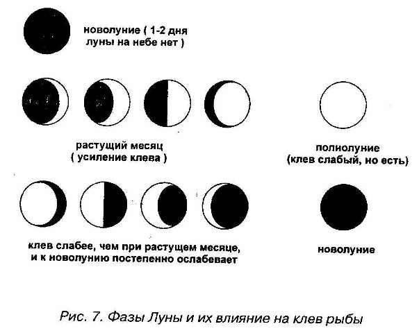 Рыболовный прогноз клёва по погодным условиям, атмосферному давлению и фазам луны