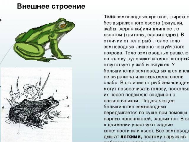 Как избавиться от лягушек в доме