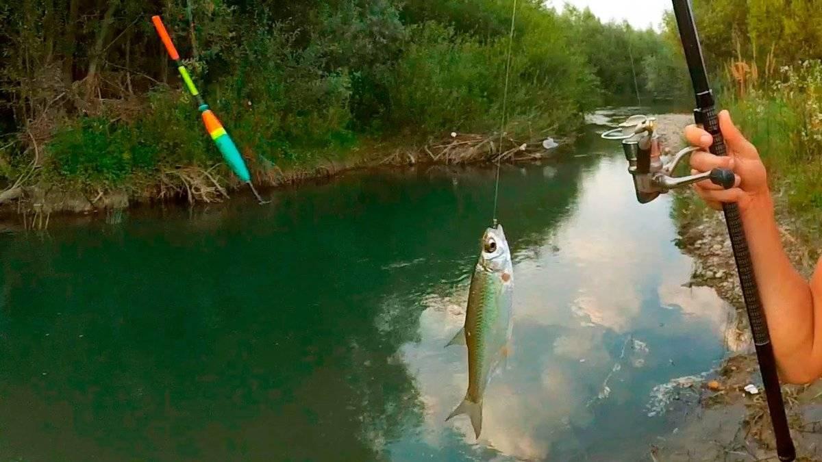 Спиннинг для начинающих от а до я | советы рыбакам