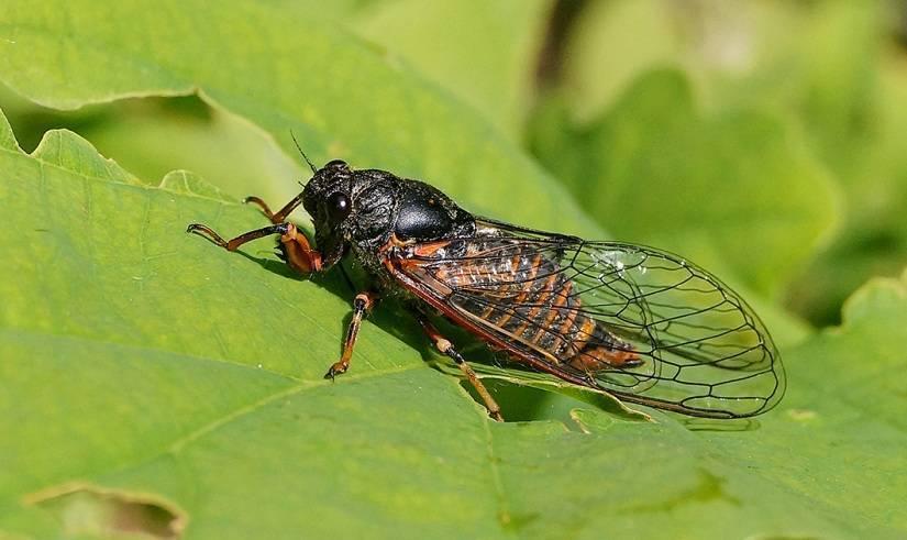 Наездник насекомое. описание, особенности, виды, образ жизни и среда обитания наездника   живность.ру