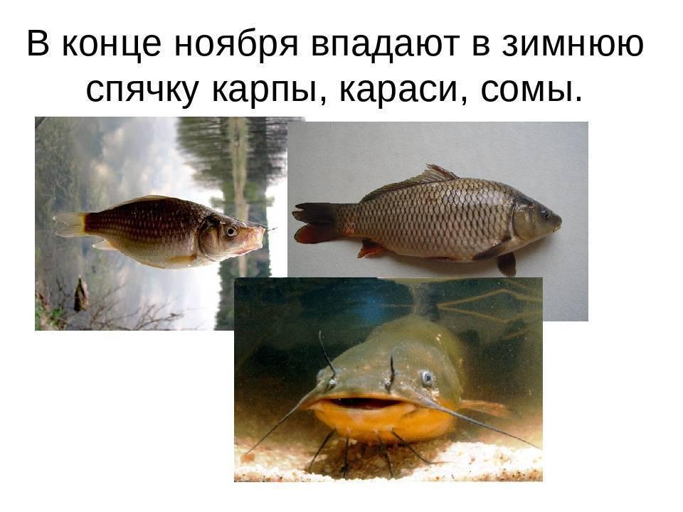 Однокомнатная берлога: как спят медведи - зима - info.sibnet.ru