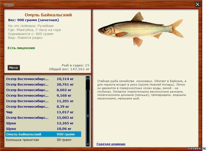 Байкальский омуль – описание рыбы, фото и видео