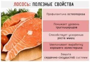 Красная рыба: полезные свойства. великолепный продукт.