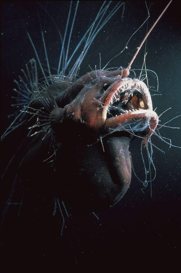 25 жутких обитателей морских глубин (23 фото + 2 гиф) — нло мир интернет — журнал об нло