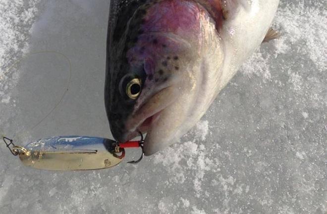 Удочка для ловли форели зимой: оснастка, разновидности, монтажи - рыба