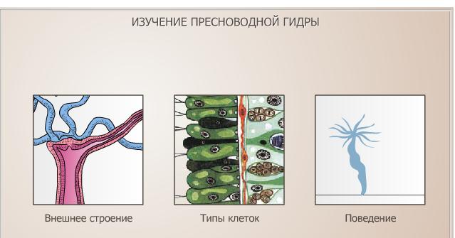 Гидра — класс Гидрозои: органы чувств, нервная и пищеварительная системы, размножение