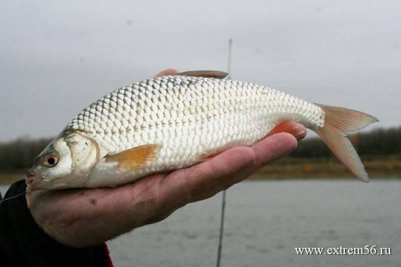 Ловля омуля   способы зимней и летней ловли - всё о рыбалке !