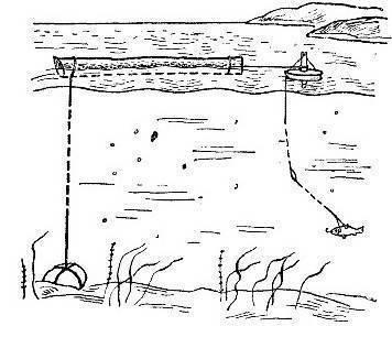 Ловля щуки на кружки: (устройство снасти, монтаж и техника ловли)