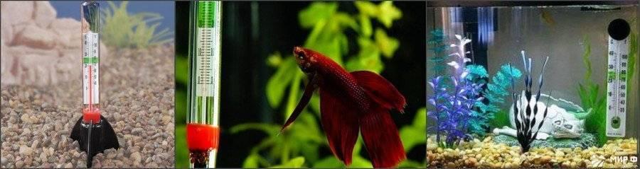 Нагреватель для аквариума и все ,что нужно о нем знать. | аквариумные рыбки