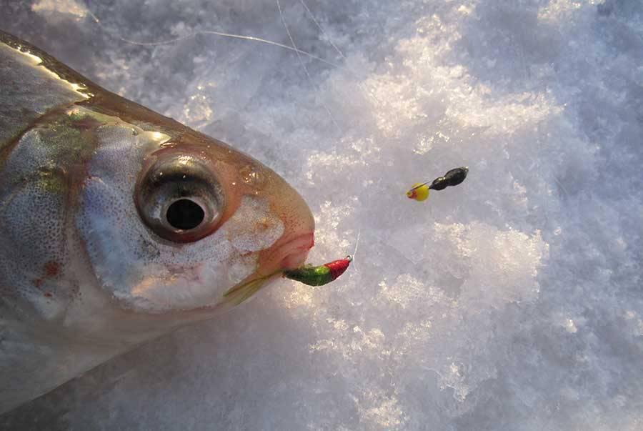 Ловля на мормышку летом: тактика рыбалки с берега и с лодки