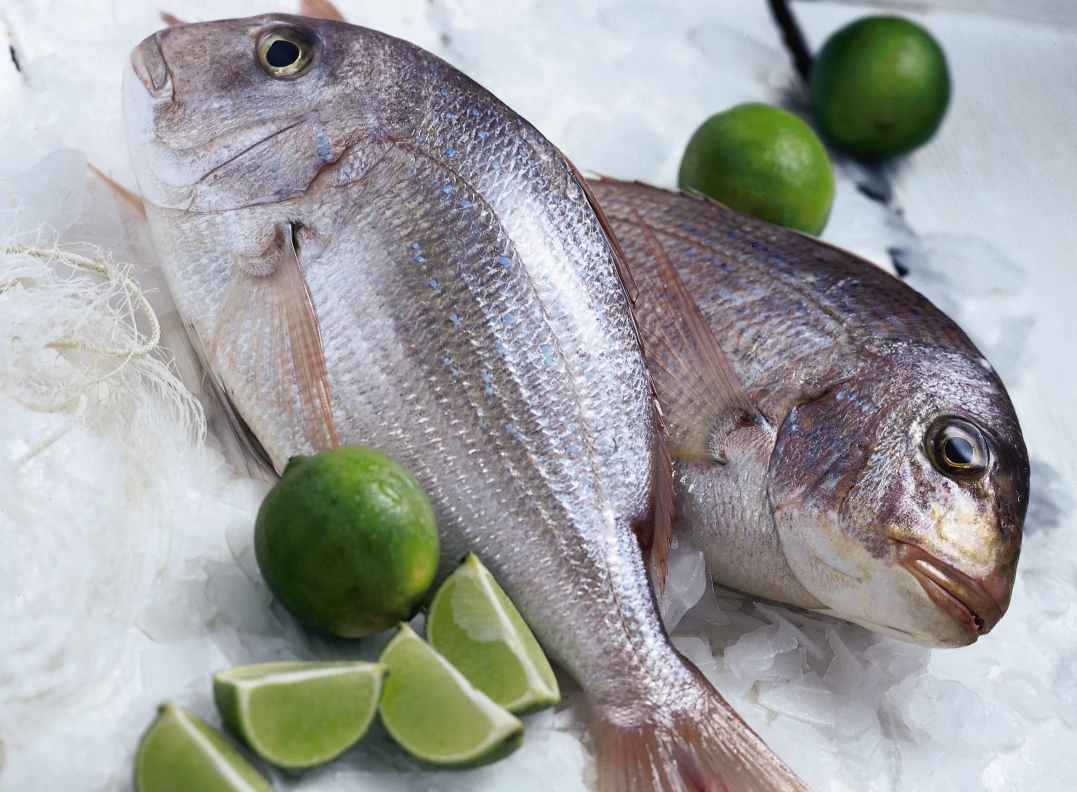 Черноморский сибас. незапланированная рыбалка - спортивное рыболовство