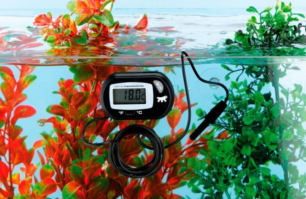 Какую воду заливать в аквариум для рыбок в первый раз и при подмене: из под крана, бутилированную покупную, кипяченую, дождевую, дистиллированную или из фильтра