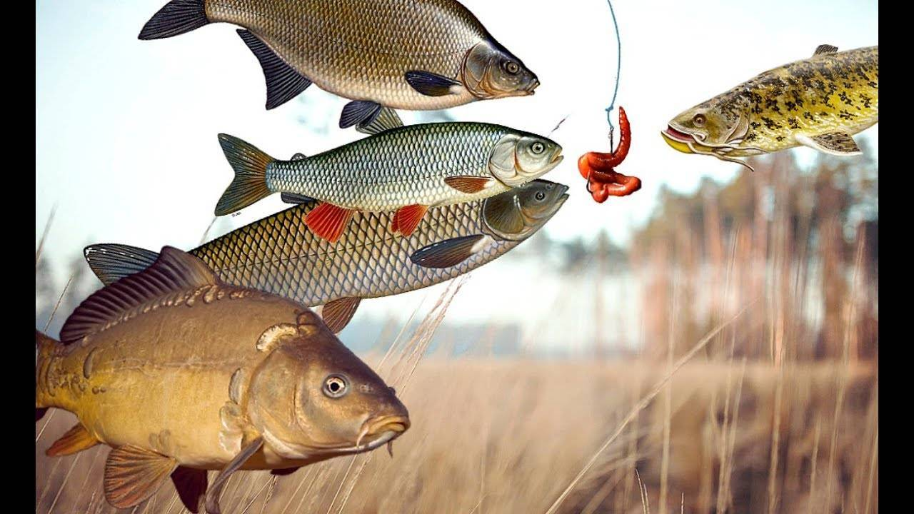 Как ловить на фидер осенью: в октябре, сентябре, ноябре как ловить на фидер осенью: в октябре, сентябре, ноябре
