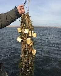 Браконьерские снасти для ловли рыбы своими руками - про рыбалку