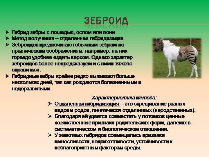 Гибрид (биология) - hybrid (biology) - qaz.wiki