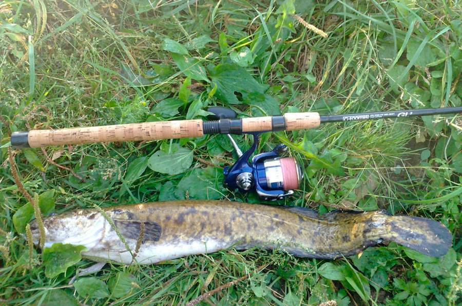 Ловля налима осенью: снасти, место, приманки, личный опыт   советы рыбакам