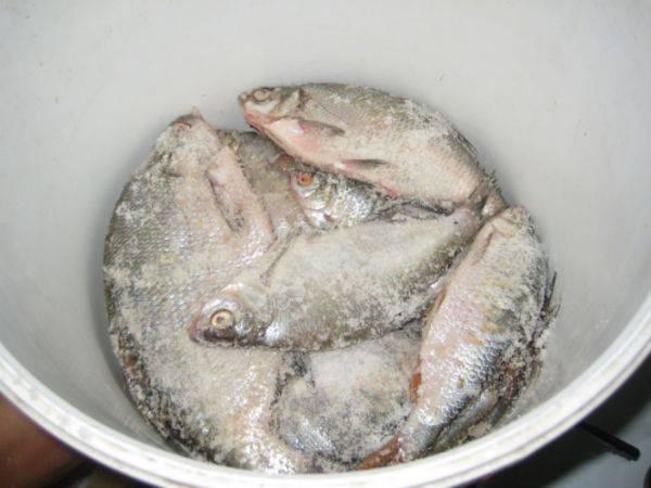 Как вялить рыбу в домашних условиях. рецепты, фото и видео