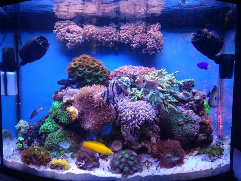 Мой простой морской аквариум • блог аквариумиста