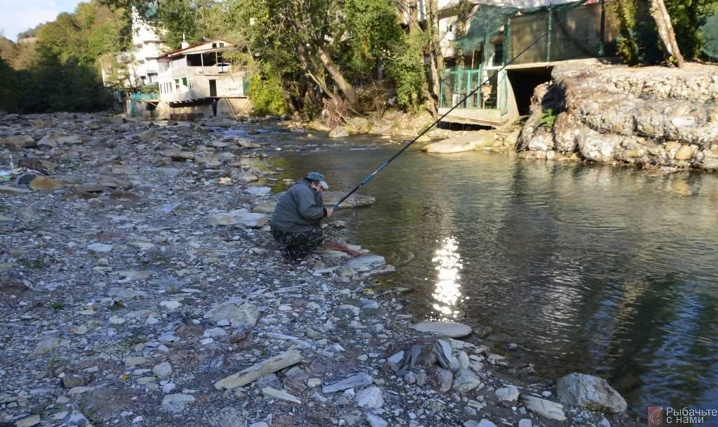 Форелевое хозяйство в адлере: как рыба в воде