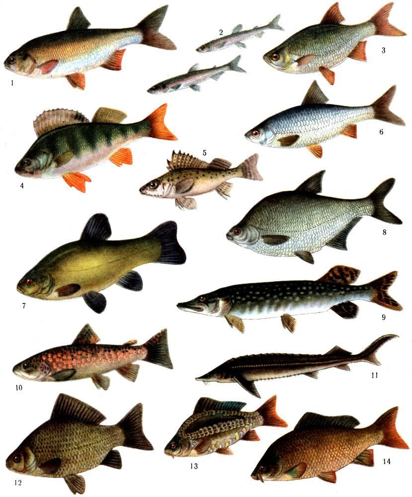 Рыбы без чешуи. названия описания и виды рыб без чешуи | животный мир