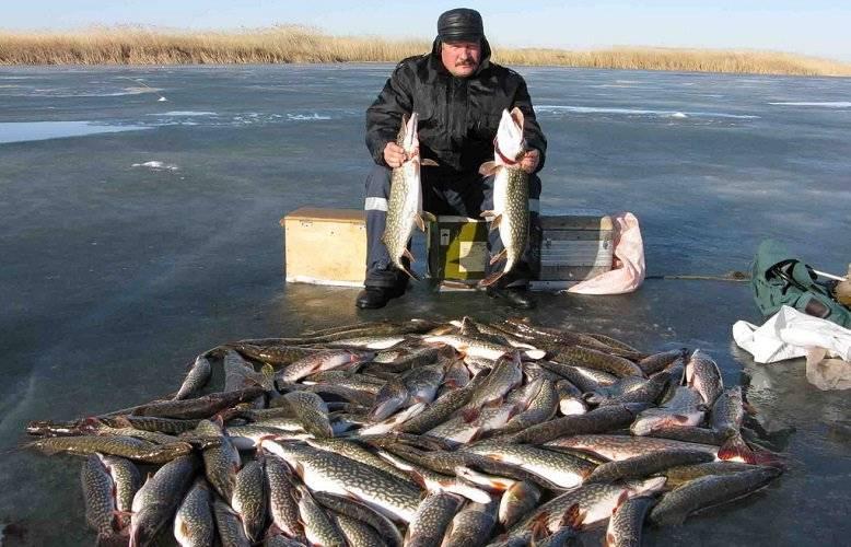 Лучшие места для рыбалки в брестской области