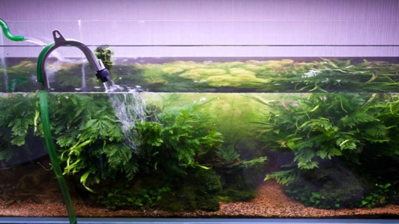 Уход за фильтром для аквариума. как правильно почистить устройство?