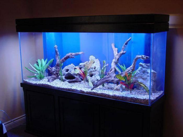 Топ-7 лучших аквариумов для дома: какой купить, плюсы и минусы, отзывы