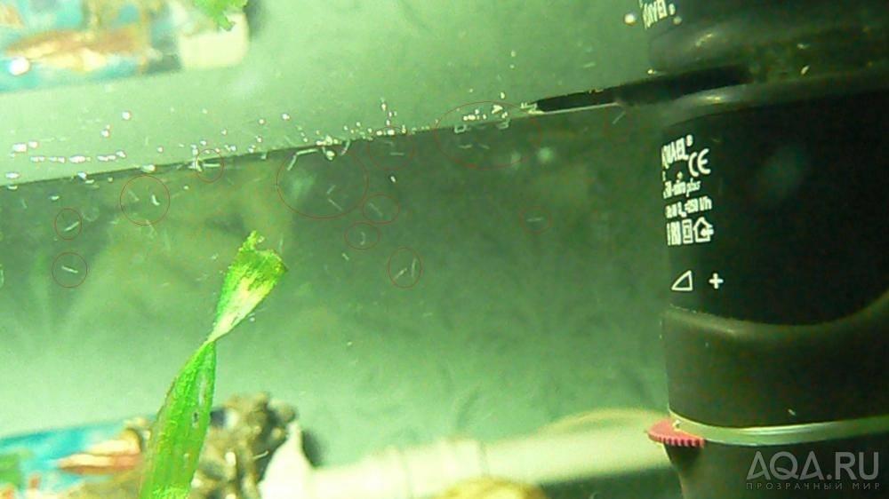 Черви в аквариуме,что делать — описание,фото