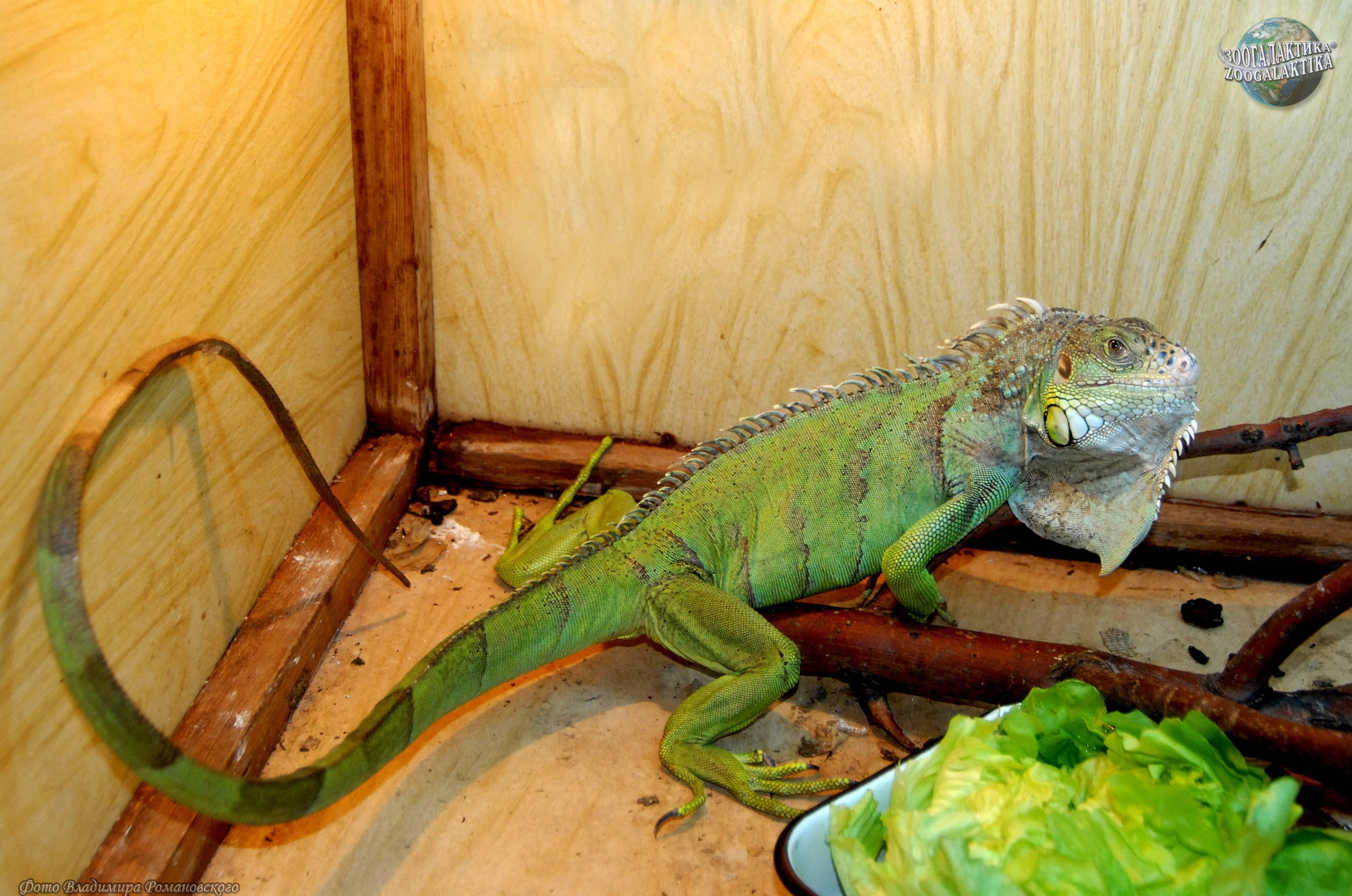 Что едят ящерицы в домашних условиях