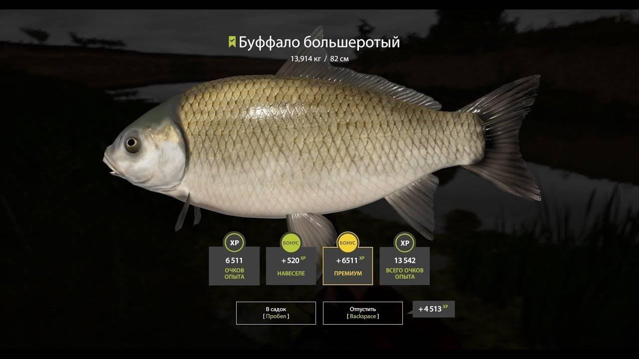 «буффало»fish-farming.ru