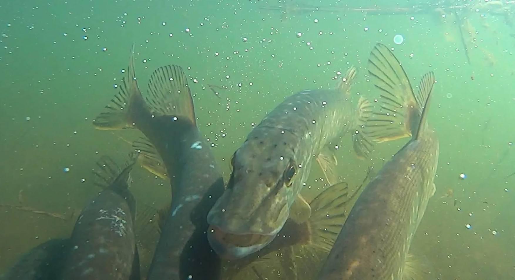 Лунный календарь рыболова на сентябрь 2020 – клев мирной и хищной рыбы!