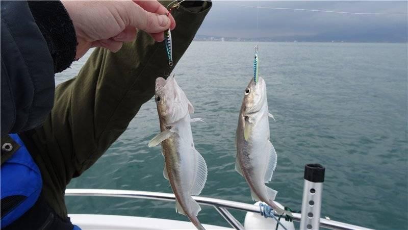 Какая рыба водится в черном море: список и особенности рыбалки