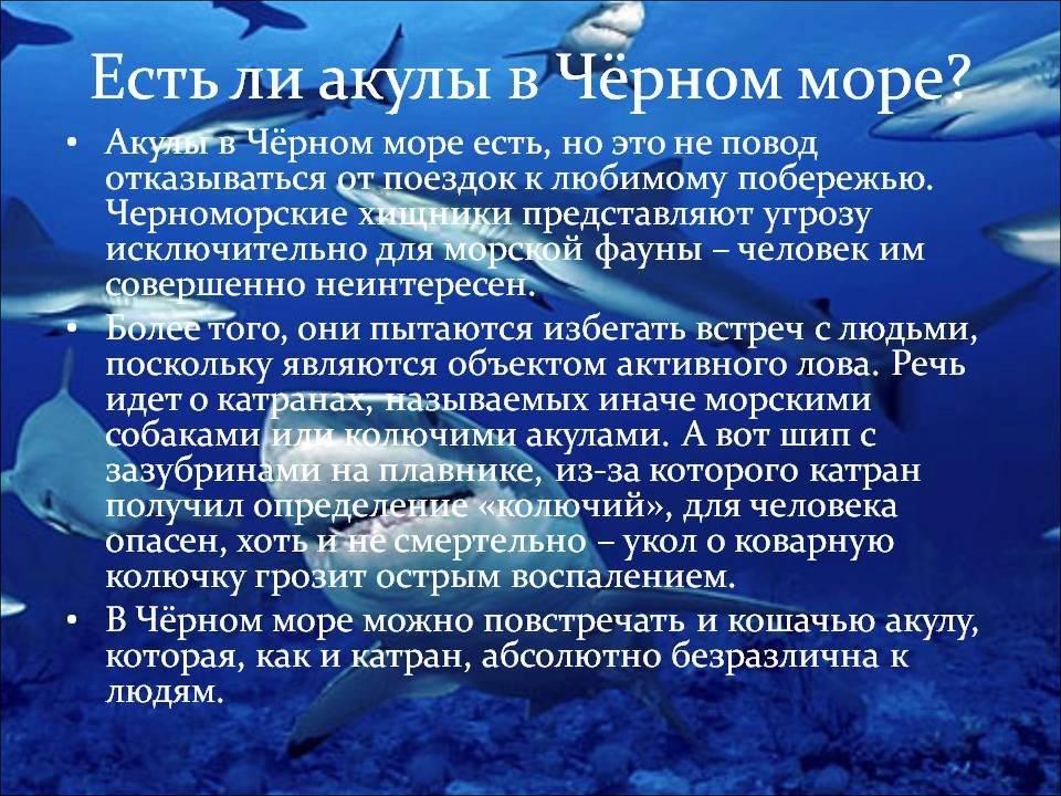Катрановая акула: колючая и заразная