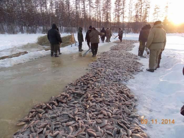 Ловля налима на реке [подробное руководство]